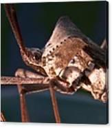 Creepy Bug Canvas Print