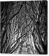 Creepy Dark Hedges Canvas Print