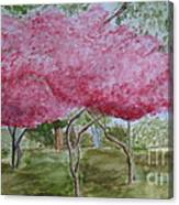 Crepe Myrtles Canvas Print