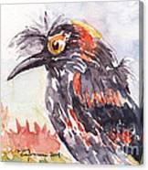 Akohekohe - Hawaiian Crested Honeycreeper Canvas Print