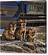 Cretan Cats-1 Canvas Print