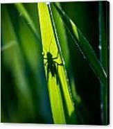 Cricket Silhouette Canvas Print