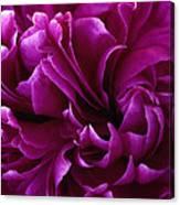 Crimson Chiffon Canvas Print