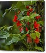 Crimson Flowers Canvas Print