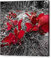 Crimson Foliage Canvas Print