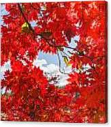 Crimson Red Leaves Background Canvas Print