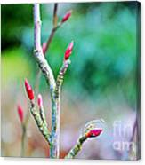 Crisp And Bracing Canvas Print