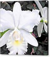 Crisp White Orchids In A Shady Garden Canvas Print