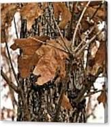 Crispy Leaves Canvas Print