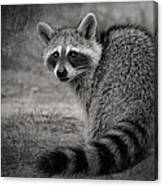 Critter Corner Canvas Print