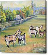 Croatian Goats Canvas Print
