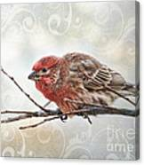 Croching Finch Canvas Print