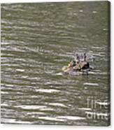 Crocodile   #0579 Canvas Print