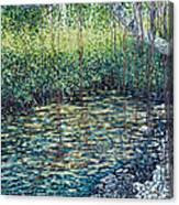 Crocodile Creek Canvas Print