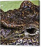 Crocodile Eye Canvas Print