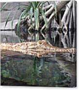 Crocodile Eyes Canvas Print
