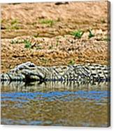 Crocodile In Watering Hole In Kruger National Park-south Africa Canvas Print