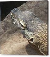 Crocodile Monitor Canvas Print