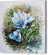 Crocuses Canvas Print