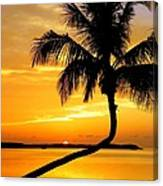 Crooked Palm Canvas Print