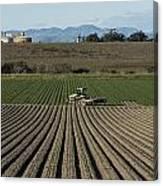 Crops In San Luis Obispo County Canvas Print
