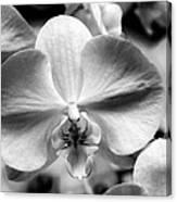Cross Orchid Canvas Print