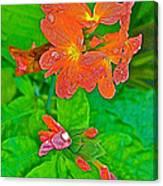 Crossandra At Indigo-dyeing Workshop In Phrae-thailand Canvas Print