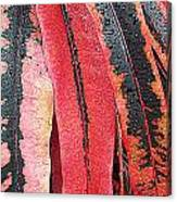Crotans With Dew Canvas Print