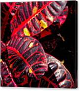 Croton Leaves In Black And Red Canvas Print
