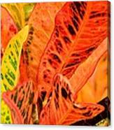 Croton's Many Colors Canvas Print