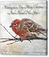 Crouching Finch Christmas Greeting Card Canvas Print