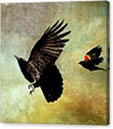 Crow And Red-winged Blackbird Canvas Print