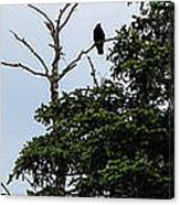 Crow - Black  Bird - Loud Call Canvas Print