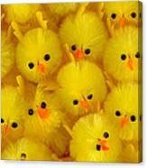 Crowded Chicks Canvas Print