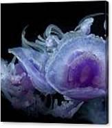 Crown Jellyfish Canvas Print