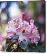 Crown Of Rhodies Canvas Print