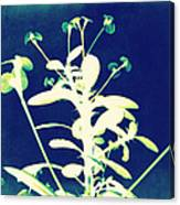 Crown Of Thorns - Blue Canvas Print