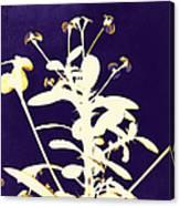 Crown Of Thorns - Indigo Canvas Print