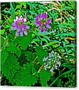 Crown Vetch And Catnip In Pipestone National Monument-minnesota Canvas Print
