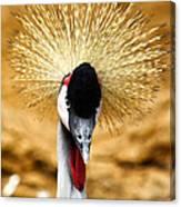 Crowned Crane - Balearica Regulorum Canvas Print