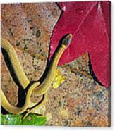 Crowned Snake Canvas Print
