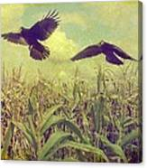 Crows Of The Corn Canvas Print