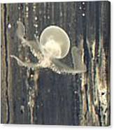 Crstal Jellyfish Canvas Print