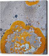 Crustose Lichen, Utah Canvas Print