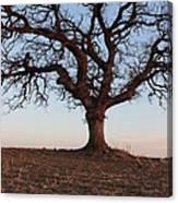 Cryptic Tree Canvas Print