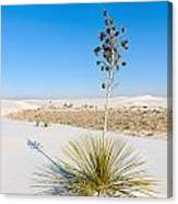 Crystal Dune Tree At White Sands National Monument In New Mexico. Canvas Print