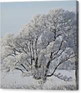 Crystal Oak Canvas Print