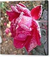 Crystal Rose Canvas Print