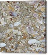 Crystal Shells Canvas Print
