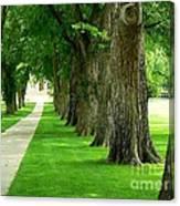 Csu Tree Path Canvas Print